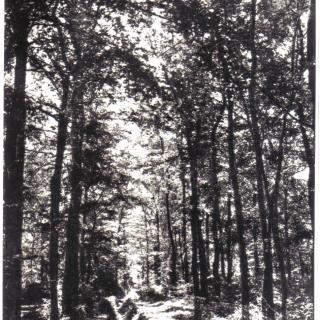 La Salzereda situada a la riba dreta del riu, tallada en l'any 1936/39.