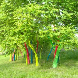 Primavera al bosc de somnis de colors