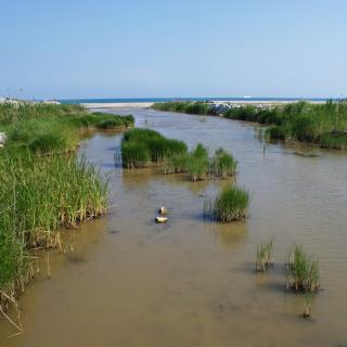 Espais Naturals del Delta de Llobregat