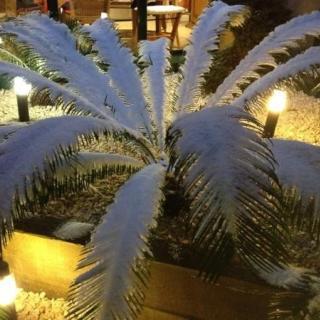 Una planta plena de neu a Sant Julià de Ramis aquest diumenge