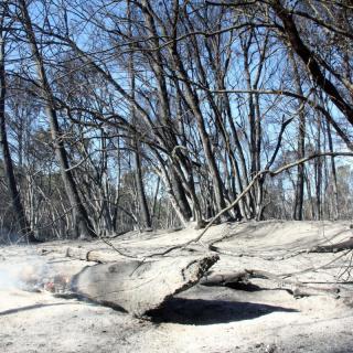 Els goscos de Foixà, completament cremats, aquest dimarts al migdia