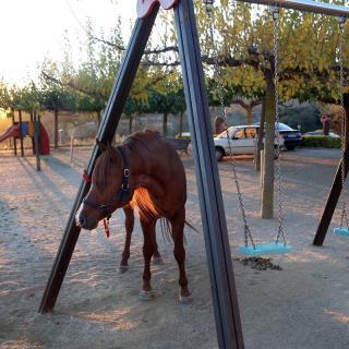 Un cavall, lligat en un gronxador a la població de Foixà