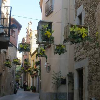 Carrer major. Mostra floral per la festa major. Maig 2014