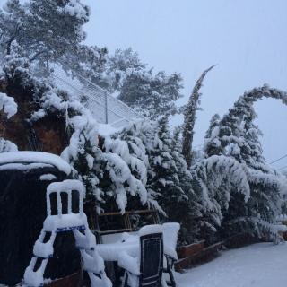 La vegetació sepultada de neu a Vallirana