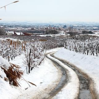 Camí d'accés a Alpicat (Segrià).