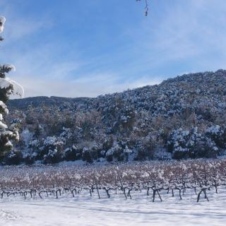 Vinyes nevades aprop del monestir de Poblet