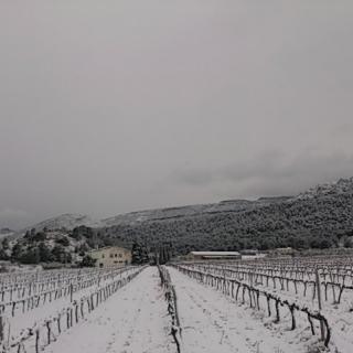 Vinyes als afores de Montblanc