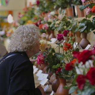 Una dona olora una de les possibles roses guanyadores a l'Escola Pia,