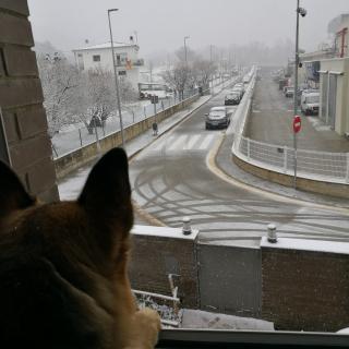 En Bark mirant la nevada a Amer