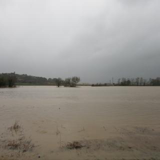 El Daró torna a l'estany d'Ullastret