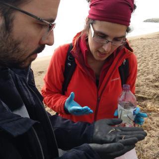 Una biòloga busca peixos a Arenys de Mar