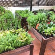 Hola Punt Avui, aquests extranys dies estic gaudint i treient rendiment a l'hort urbà que tinc muntat a casa, a Sants (Bcn). Animo a la gent a gaudir de la jardineria en general, et fa sentir millor.