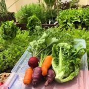 Traient rendiment a l'hort urbà que tinc muntat a casa, a Sants (Bcn). Animo a la gent a gaudir de la jardineria en general, et fa sentir millor.