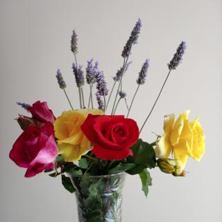 Primavera, perfums de roses i lavanda #llibertatpresosi presespolitics