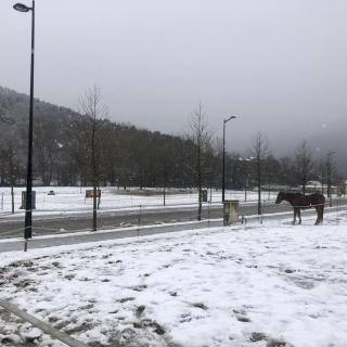 Imatges de la nevada a Ribes de Freser