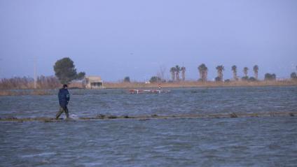 Un arrossaire comprova els danys provocats pel temporal Gloria al seu camp, aquest dimecres a la bassa de l'Arena del Delta de l'Ebre