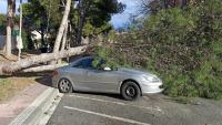 Un arbre tombat sobre un vehicle pel vent, a Cambrils
