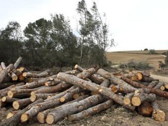 Jaume Valls als boscos de l'entorn de Can Lluc del Tossal que van quedar completament trinxats per la tramuntanada Ferran Polo
