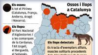 L'os es fa fort al Pirineu, on es té constància de 64 exemplars