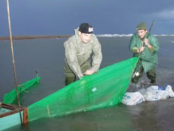 Al delta de l'Ebre hi ha uns 300 punts de pesca d'angula autoritzats.  EL PUNT