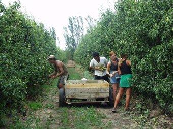 L'economia submergida és palesa en el sector agrícola Arxiu