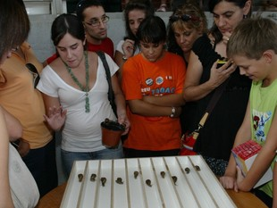 La primera cursa de cargols es va celebrar l'any 2007.  EUDALD PICAS