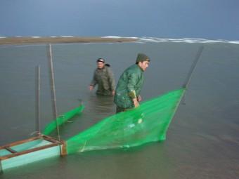 Pescadors d'angula posant el tresmall a la vora de la desembocadura de l'Ebre.  A.S