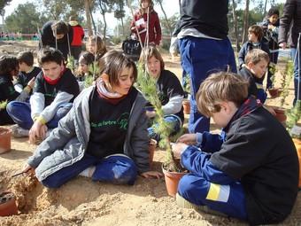 Alguns alumnes realitzen activitats de repoblació a la serra. /  ARXIU