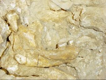 Mandíbula descoberta a la Cauna de l'Aragó l'any 2008 ARXIU