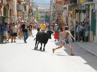 Una imatge d'arxiu de bous al carrer a les festes majors d'Ulldecona.  EL PUNT