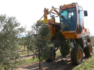 A Font Rovira, la maquinària de la vinya l'usen a l'olivera.  A.P