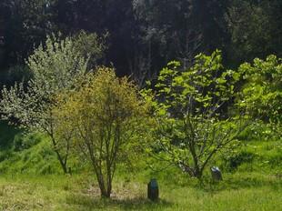 Alguns dels milers d'arbres que es poden trobar a l'Arborètum, en una imatge de la setmana passada. /  G.ARIÑO