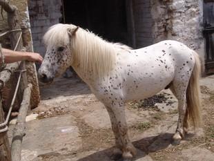 El cavall a la quadra d'una casa de Sarrià, a l'espera que l'amo el reclami.  M. BARRERA