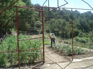 Algunes persones que s'estan tractant a Mas dels Frares fent diferents activitats, com obres o cultivar l'hort.  G. PLADEVEYA