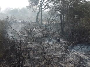Zona forestal afectada per l'incendi d'Oliola.  DAVID MARÍN