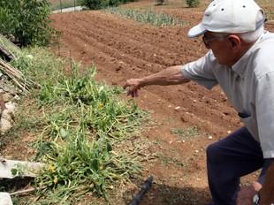 En Joan Parera, veí de Serinyà, mostra els efecte de la pedregada al seu hort particular. ACN/ JORDI BATALLER