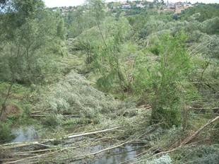 Una gran quanitat d'arbres caiguts sobre el riu Ter pel fort vent que va acompanyar la tempesta.  D.V.