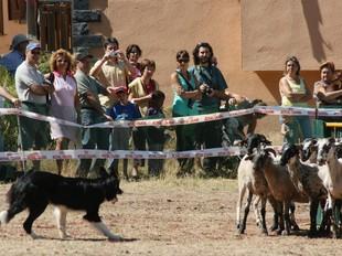 Un dels gossos participants al concurs d'ahir /  ELISABETH MAGRE