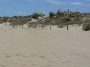 Aspecte de les dunes de les platges de la zona Nord d'Oliva. /  CEDIDA
