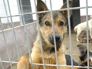 Actualment l'Última Llar té aproximadament més de 250 gossos a les instal·lacions.  J. F