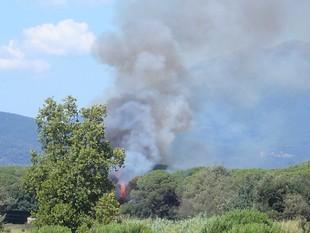 L'incendi ha afectat una zona boscosa entre els municipis de Sant Antoni de Vilamajor i Cardedeu.  ORIOL RAMOS