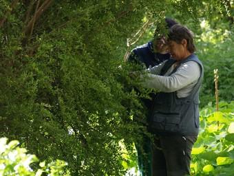 Dos operaris realitzen una poda als jardins. /  ESCORCOLL