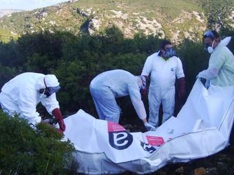 Els operaris ensacant un dels bous morts per després transportar-lo en helicòpter.  EL PUNT