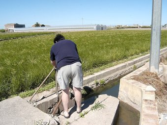El sector del conreu de l'arròs ha estat un dels grna oblidats pel decret fiscal. /  JOSÉ CUÉLLAR