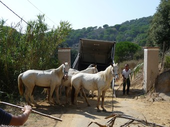 Els cavalls van marxar ahir de l'hípica de Sant Pol. T.M