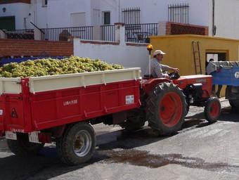 Tractor carregat i a punt del pesatge a la bàscula d'un poble dels Serrans. /  ESCORCOLL