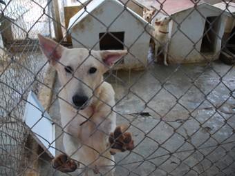Una de les gàbies amb gossos del refugi de Cubelles, ahir.  M.L