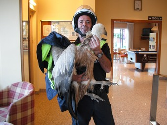 Un agent de la policia d'Olot amb el voltor capturat.  EL PUNT