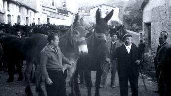Una de les darreres fires de bestiar de Salàs de Pallars.  ARXIU