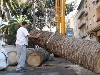 Operacions de retirada de palmeres afectades pel Morrut roig. /  ARXIU